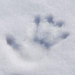 長野県民が教える!大雪予報は怖くない